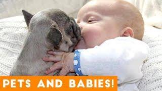 Most Adorable Animal and Baby Compilation 2018 | Funny Pet Videos