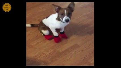Super funny animal Compilation Must Watch Funny Animal Video Episode 15 Try to Not Laugh