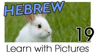 Learn Hebrew Vocabulary With Pictures - Farm Animals