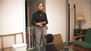 Dog Training : How To Keep Dogs&Cats From Fighting