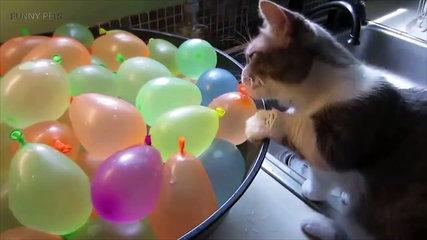 Cats VS Balloons funny animals