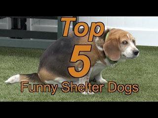 Dog Shelter Releases 'Top 5 Funny Shelter Dogs' Compilation