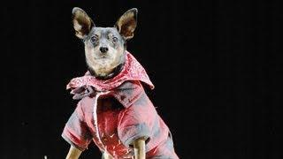 Halloween Safety Tips For Dogs   Teacher's Pet With Victoria Stilwell