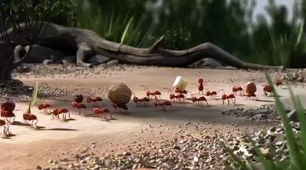 The Power of Teamwork - Funny Animation.