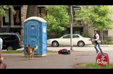 Dog Sled Toilet - Funny Video