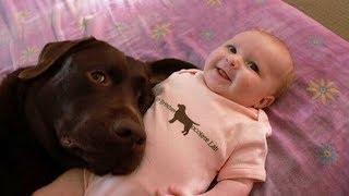 Labrador Retriever Puppies Funny and Cute Videos Compilation #4