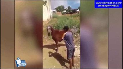 Amazing World Funny Videos 04/09/17