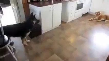 funny best videos in the worlds