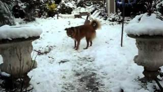 How To Keep A Dog Amused In The Snow
