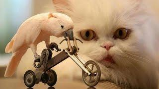 Animals & pets: Try not to grin or laugh challenge - Funny animal compilation