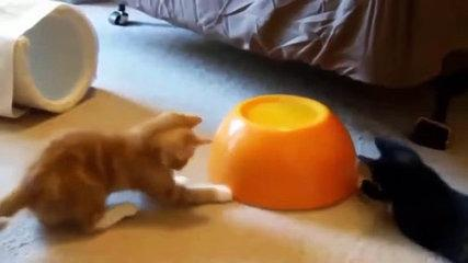 Funny Cat Fails Try not to Laugh 2016 (Most Popular) Part 2 - Funniest and New update - YouTube