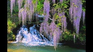 Wisteria Waterfall Landscape Acrylic Painting LIVE Tutorial