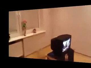funny videos cats lopi
