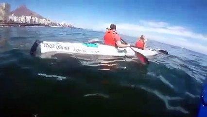 Une Baleine surgit à côté de canoes kayaks !