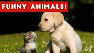 Funniest Animal Reactions, Bloopers & Moments November 2016 Weekly Compilation | Funny Pet Videos