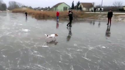 Funny Animals Slipping on Ice!