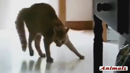 Funny Cat Videos 2016