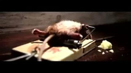funny rat video