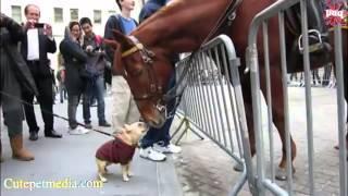 Funniest Horse Videos 2014