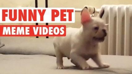 Funny Pet Meme Video Compilation 2016