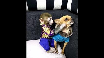 Funny...Monkey tries to kiss dog