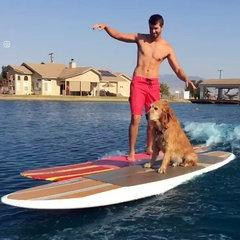 Funny Dog Surfs With His Owner