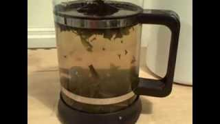 Can You Make Tea In A French Press ? How To Make Tea.
