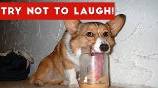 Try Not To Laugh At This Funny Pet Video Compilation | Funny Pet Videos