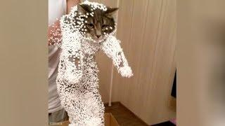 Bet you havent't LAUGHED THAT HARD before! - Super FUNNY CATS