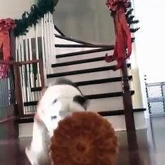 Best Funny Animal 2016