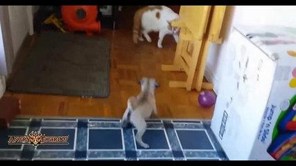 Best Of Funny Pugs and Cats Compilation