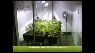 COME COLTIVARE INDOOR ¦ TUTORIAL ITALIANO ¦ 1 PARTE ¦ KUSHWEED