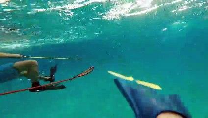 2 plongeurs pris en chasse par un requin aux bahamas