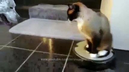 Funny Cat Enjoying Ride