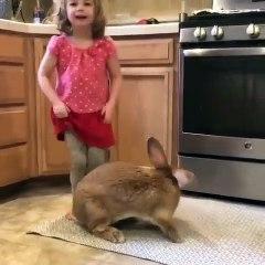 Regardez un peu la taille de ce lapin de compagnie