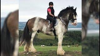 Cute And funny horse Videos Compilation cute moment of the horses - Soo Cute! #38