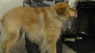 How To Keep A Dog From Shaking While Giving Him A Bath : How To Domesticate Your Dog