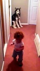 Effrayeu par l'aspirateur, ce beubeu se reufugie aupreus de son chien !
