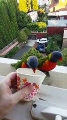 Ces superbes oiseaux.. sont eugoistes et ne partagent pas leur repas !