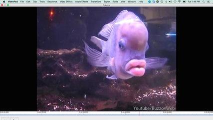 Funny Fish: Fish lips