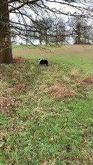Ce chien saute et tombe au chaque fois, essayant de mordre une branche d'arbre !