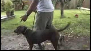 Dog Training&Ownership : How To Keep A Dog From Pulling On The Leash