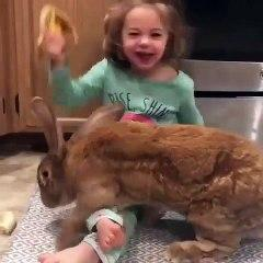 Ce lapin est plus gros que la petite fille !