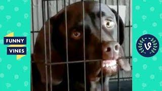 TRY NOT to LAUGH or GRIN: Funny Animals Vines Compilation 2017 | Funny Vine