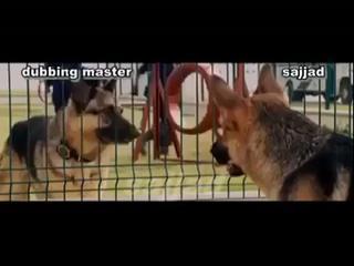 Punjabi Totay  Funny Conversation Between Dogs