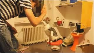 FUNNY VIDEOS Funny Cats Funny Cat Videos Funny Animals Cute Pets Try Not To Laugh