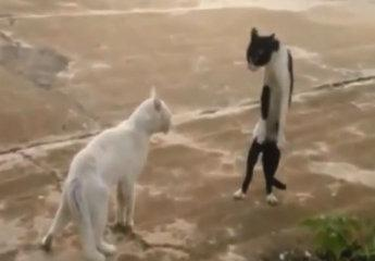 Funny Kitty Video Clips