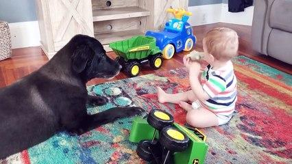 Baby and Dog Funny Fails - Funny Baby Video