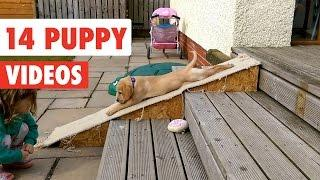14 Funny Puppy Videos Compilation 2017