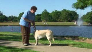 Dog Training Tips: How To Keep Dog From Pulling On Leash